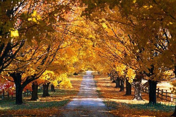 ősz_meleg