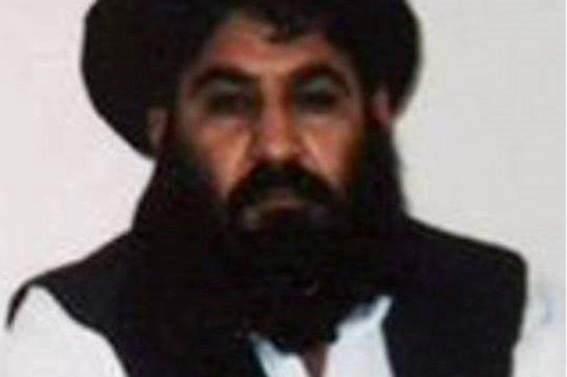 talib-vezeto